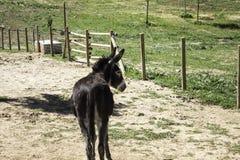 Ferme d'âne de Brown Photo stock