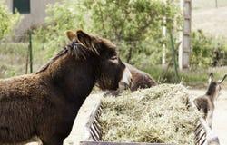 Ferme d'âne de Brown Image libre de droits
