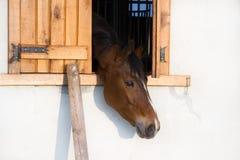 Ferme d'Andi-cheval-Cheval Photo libre de droits