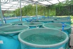 Ferme d'aquiculture Images libres de droits