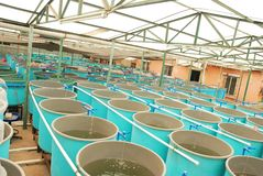 Ferme d'aquiculture d'agriculture images libres de droits