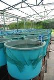 Ferme d'aquiculture d'agriculture images stock