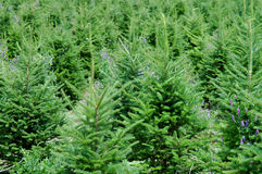 Ferme d'arbre de Noël Images libres de droits