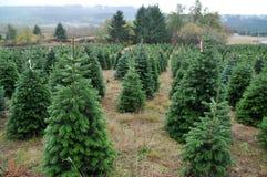 Ferme d'arbre de Noël Photo libre de droits