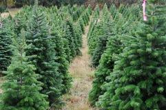 Ferme d'arbre de Noël Photo stock