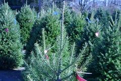 Ferme d'arbre de Noël Photographie stock