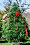 Ferme d'arbre de Noël Photographie stock libre de droits
