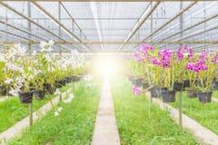 Ferme d'orchidée brouillée pour le fond Image stock