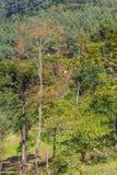 Ferme dans la vallée et les oiseaux en Nova Petropolis Image stock