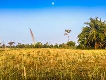 Ferme dans le domaine de riz avec le lever de soleil le matin et le bleu Image libre de droits
