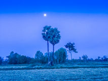 Ferme dans le domaine de riz avec le lever de soleil le matin et le bleu Images libres de droits