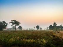Ferme dans le domaine de riz avec le lever de soleil le matin et le bleu Image stock