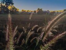 Ferme dans le domaine de riz avec le lever de soleil le matin et le bleu Photo libre de droits