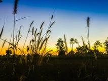 Ferme dans le domaine de riz avec le lever de soleil le matin et le bleu Photos stock