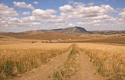 Ferme dans un champ de maïs Photo stock