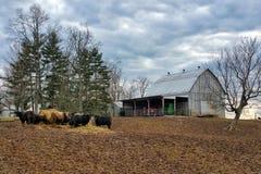 Ferme de bétail Images libres de droits