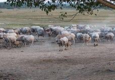 Ferme de Buffalo Photo libre de droits