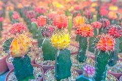 Ferme de cactus au foyer sélectif de la Thaïlande Photographie stock