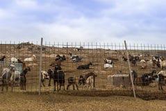 Ferme de chèvre Photographie stock libre de droits