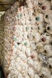 Ferme de champignon Photographie stock