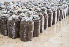 Ferme de champignon Photo libre de droits