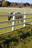 Ferme de cheval Photo stock