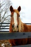 Ferme de cheval photo libre de droits