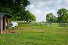 Ferme de cheval Photographie stock