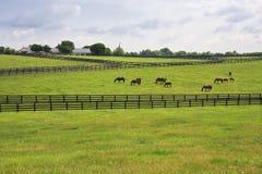 Ferme de cheval dans la campagne du Kentucky photos libres de droits
