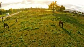 Ferme de cheval de Bluegrass banque de vidéos