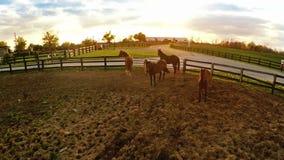 Ferme de cheval de Bluegrass clips vidéos