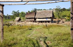 Ferme de colon en Amazone Photos stock