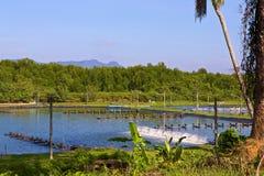 Ferme de crevette à la côte de la Thaïlande Images stock