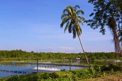 Ferme de crevette à la côte de la Thaïlande Photographie stock libre de droits