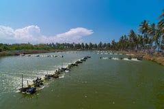 Ferme de crevette, Thaïlande Images stock