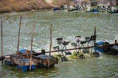 Ferme de crevette, Thaïlande Photographie stock libre de droits