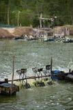 Ferme de crevette, Thaïlande Photo libre de droits