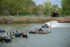 Ferme de crevette, Thaïlande Image libre de droits