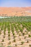 Ferme de désert près d'Al Ain, EAU Images libres de droits