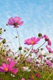 Ferme de fleur Images stock