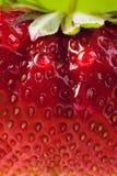 Ferme de fraise d'été de fond d'art Photographie stock libre de droits