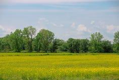 Ferme de graine de moutarde dans Northder Ohio image libre de droits