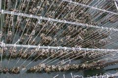 Ferme de moule Golfe de fermes d'huître Ferme d'huître dans la province orientale de la Thaïlande images libres de droits