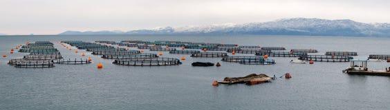 Ferme de moules, de poissons et de mollusques de en Grèce Image libre de droits