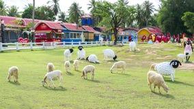 Ferme de moutons de Pattaya Image libre de droits
