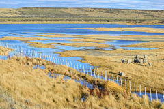 Ferme de moutons et les couleurs de lac Image libre de droits
