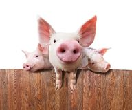 Ferme de porc Photos libres de droits