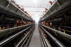 Ferme de poulet photographie stock libre de droits