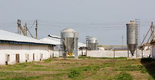 Ferme de poulet avec quatre silos de stockage de grain Photo stock