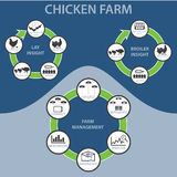 Ferme de poulet Infographic Photo stock